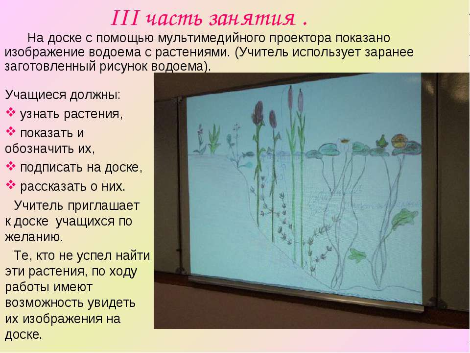 III часть занятия . Учащиеся должны: узнать растения, показать и обозначить и...