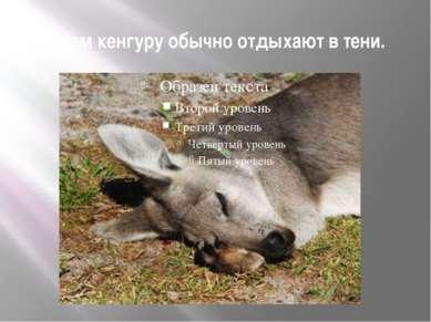 Днем кенгуру обычно отдыхают в тени.