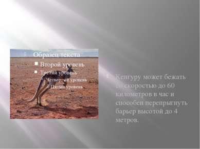Кенгуру может бежать со скоростью до 60 километров в час и способен перепрыгн...