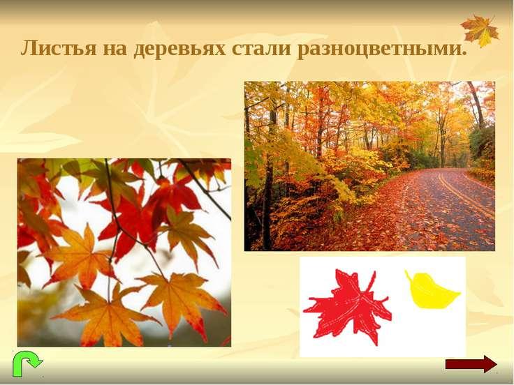 Листья на деревьях стали разноцветными.