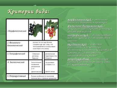 Критерии вида: морфологический – отличие по внешним и внутренним признакам фи...