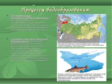 Процессы видообразования: Аллопатрическое (географическое) видообразование во...