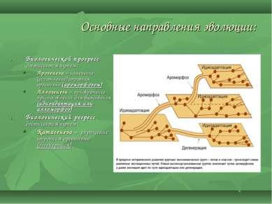 Основные направления эволюции: Биологической прогресс достигается путем: Арог...