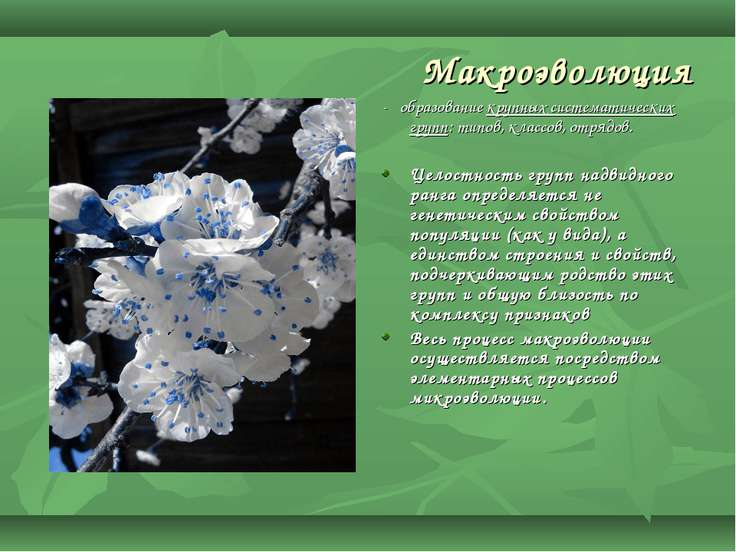 Макроэволюция - образование крупных систематических групп: типов, классов, от...