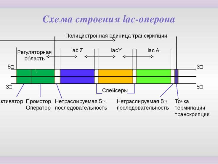 Боль в животе и температура 38 у ребенка 6