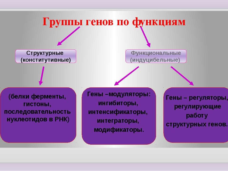 Группы генов по функциям Структурные (конститутивные) (белки ферменты, гистон...