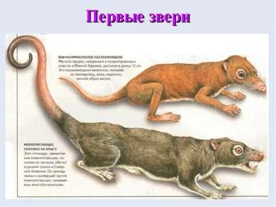 Первые звери