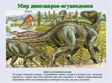 Мир динозавров-игуанодонов ШИП НА БОЛЬШОМ ПАЛЬЦЕ На конце большого пальца у и...