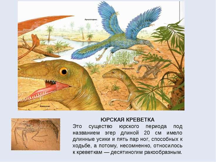 ЮРСКАЯ КРЕВЕТКА Это существо юрского периода под названием эгер длиной 20 см ...