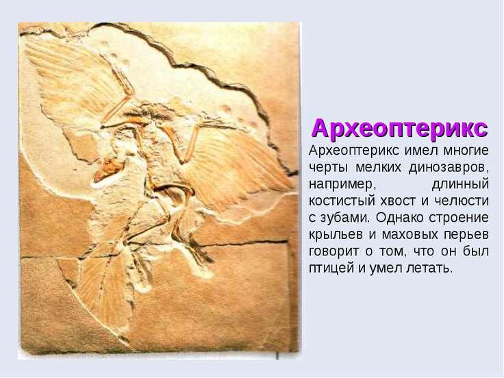 Археоптерикс Археоптерикс имел многие черты мелких динозавров, например, длин...