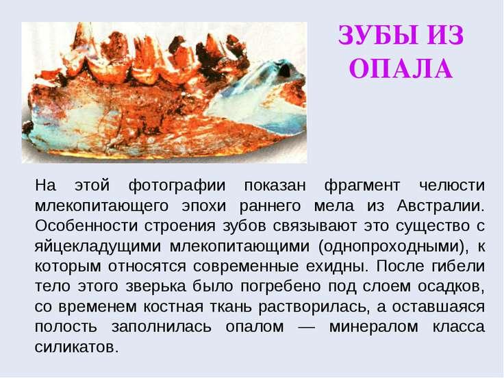 ЗУБЫ ИЗ ОПАЛА На этой фотографии показан фрагмент челюсти млекопитающего эпох...