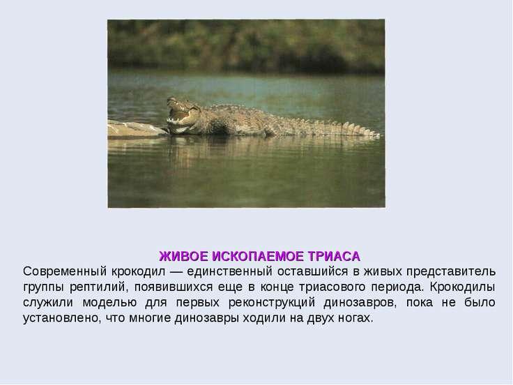 ЖИВОЕ ИСКОПАЕМОЕ ТРИАСА Современный крокодил — единственный оставшийся в живы...