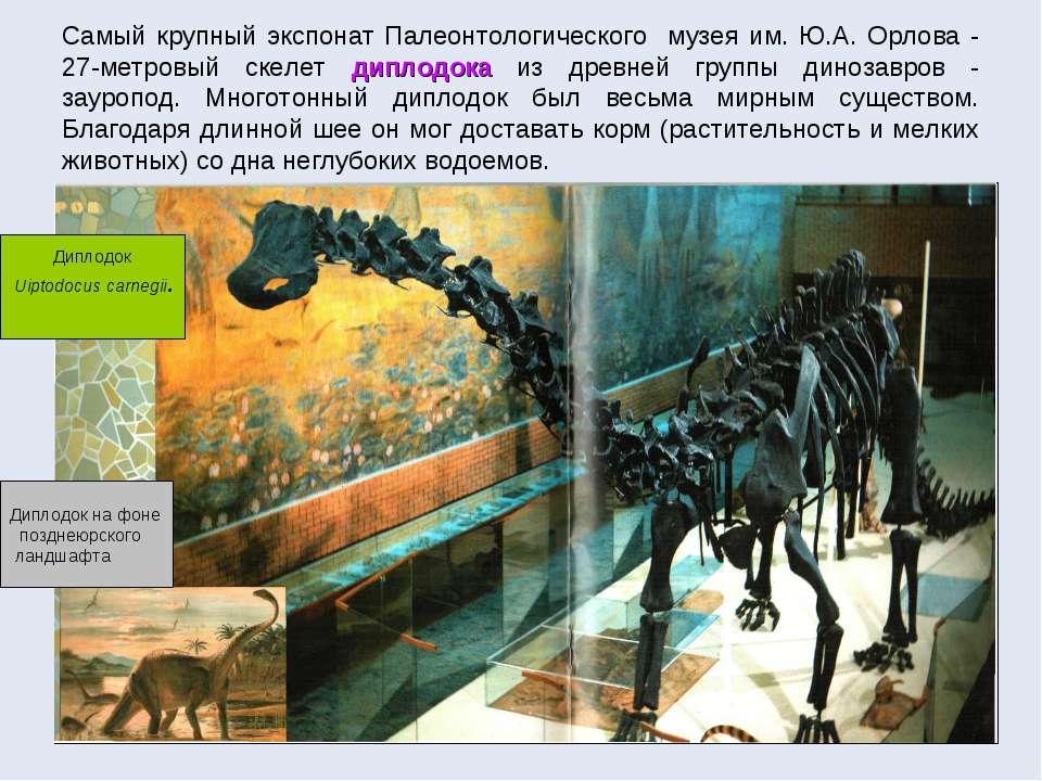Самый крупный экспонат Палеонтологического музея им. Ю.А. Орлова - 27-метровы...