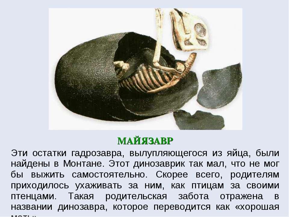 МАЙЯЗАВР Эти остатки гадрозавра, вылупляющегося из яйца, были найдены в Монта...