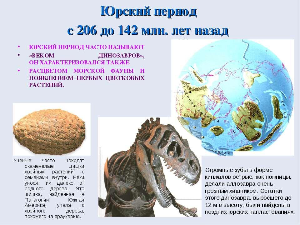 Юрский период с 206 до 142 млн. лет назад ЮРСКИЙ ПЕРИОД ЧАСТО НАЗЫВАЮТ «ВЕКОМ...
