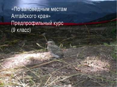 «По заповедным местам Алтайского края» Предпрофильный курс (9 класс) *