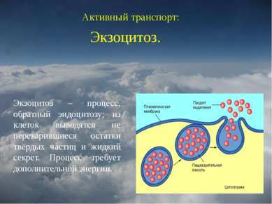Активный транспорт: Экзоцитоз. Экзоцитоз – процесс, обратный эндоцитозу; из к...
