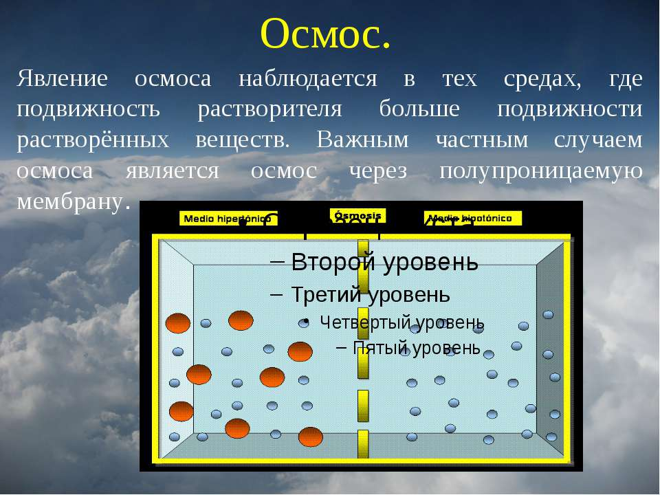 Осмос. Явление осмоса наблюдается в тех средах, где подвижность растворителя ...