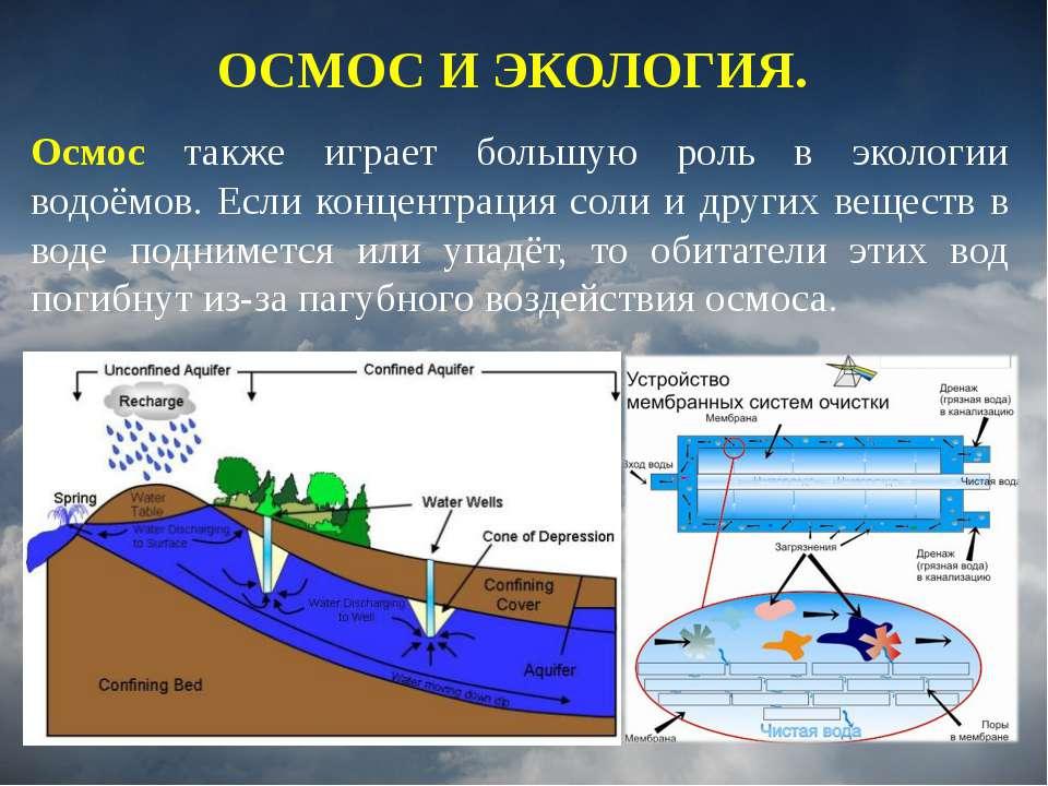 Осмос также играет большую роль в экологии водоёмов. Если концентрация соли и...