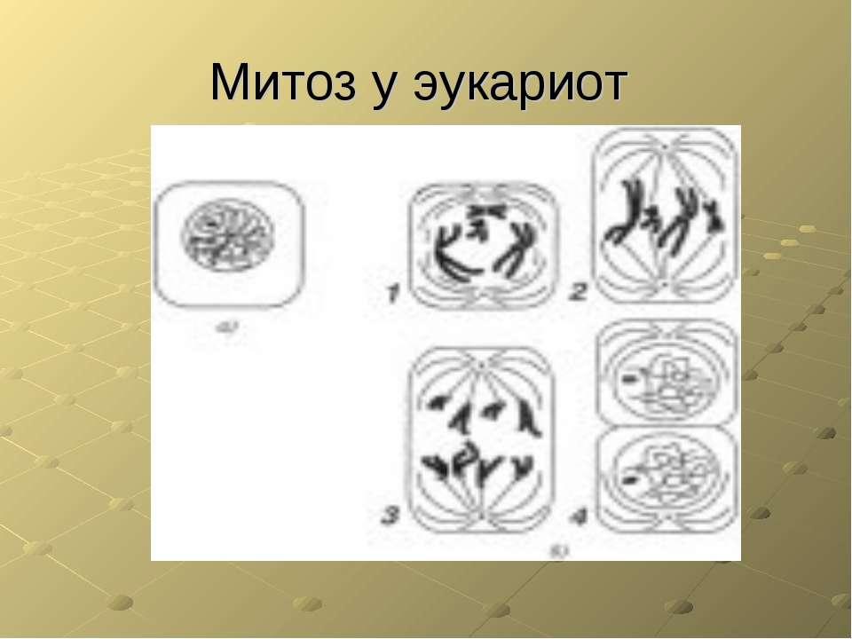 Митоз у эукариот