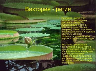 Виктория - регия Виктория - регия (лат. Victória) — род водных растений семей...