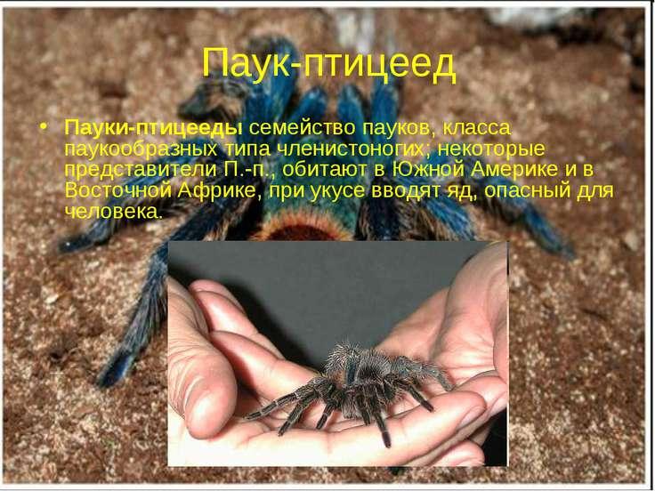 Паук-птицеед Пауки-птицееды семейство пауков, класса паукообразных типа члени...