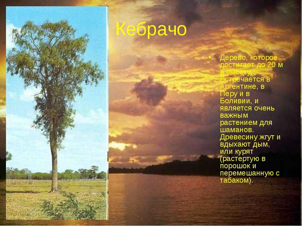 Кебрачо Дерево, которое достигает до 20 м в высоту. Встречается в Аргентине, ...