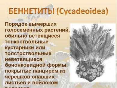 Порядок вымерших голосеменных растений, обильно ветвящиеся тонкоствольные кус...