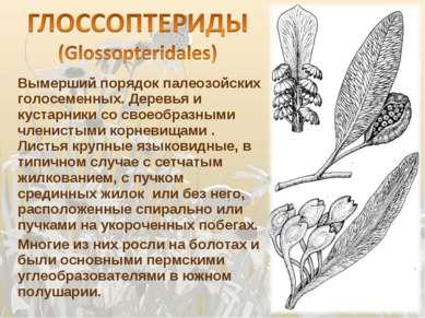 Вымерший порядок палеозойских голосеменных. Деревья и кустарники со своеобраз...