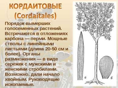 Порядок вымерших голосеменных растений. Встречаются в отложениях карбона — пе...