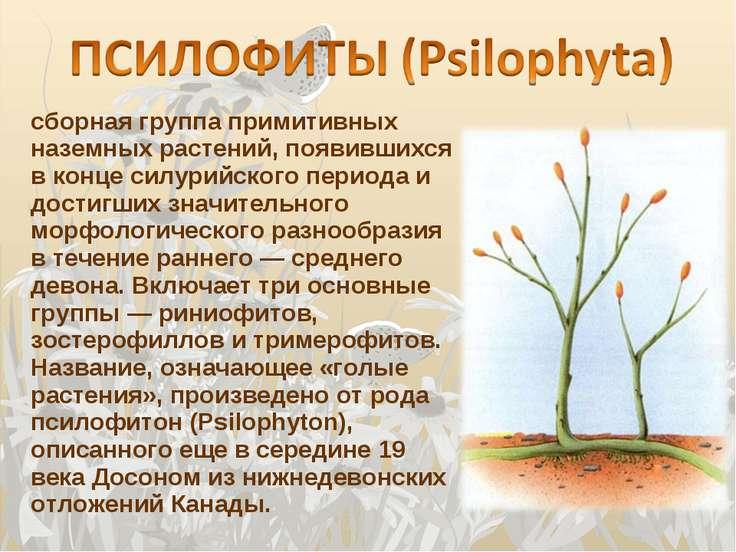 сборная группа примитивных наземных растений, появившихся в конце силурийског...