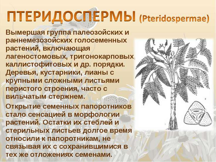Вымершая группа палеозойских и раннемезозойских голосеменных растений, включа...