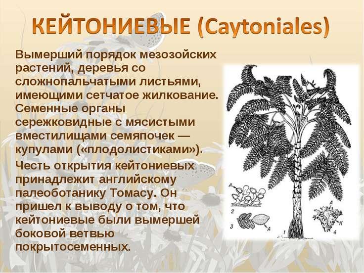 Вымерший порядок мезозойских растений, деревья со сложнопальчатыми листьями, ...