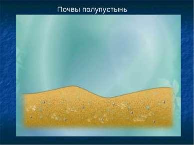 Почвы полупустынь