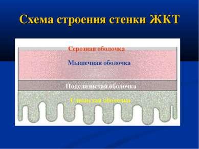Схема строения стенки ЖКТ Серозная оболочка Мышечная оболочка Подслизистая об...