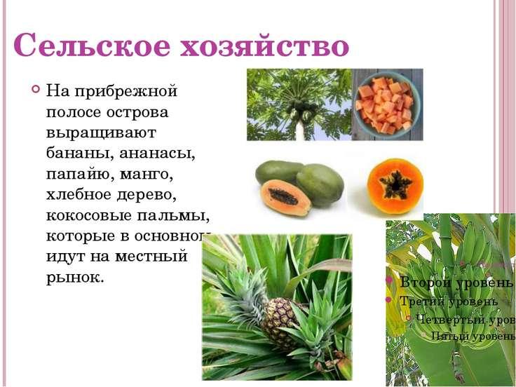 Сельское хозяйство На прибрежной полосе острова выращивают бананы, ананасы, п...