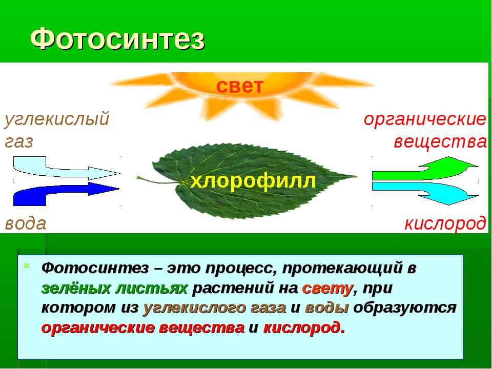 Фотосинтез Фотосинтез – это процесс, протекающий в зелёных листьях растений н...