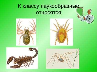 К классу паукообразные относятся