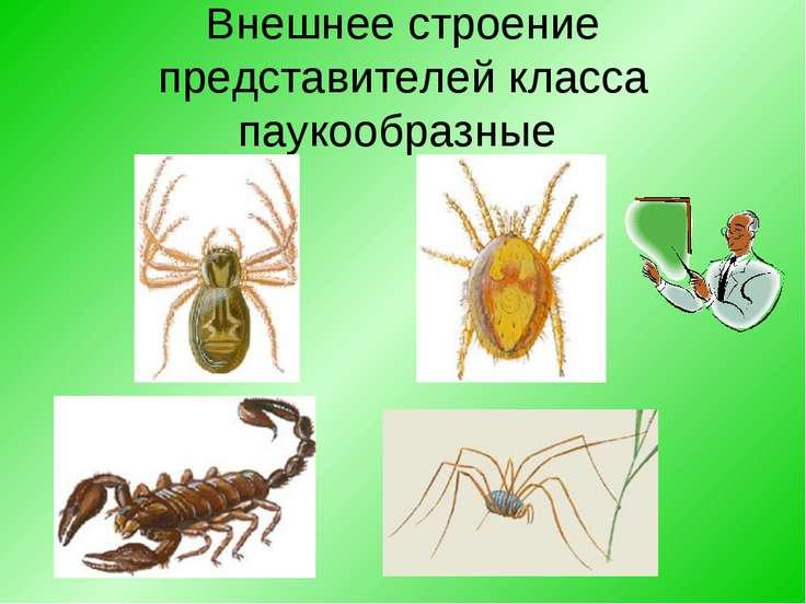 Внешнее строение представителей класса паукообразные