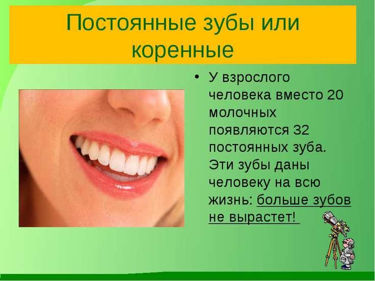 Постоянные зубы или коренные У взрослого человека вместо 20 молочных появляют...