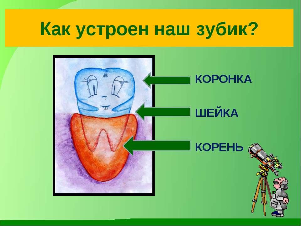 Как устроен наш зубик? КОРОНКА ШЕЙКА КОРЕНЬ
