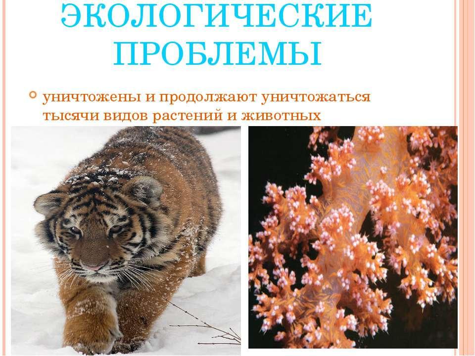 ЭКОЛОГИЧЕСКИЕ ПРОБЛЕМЫ уничтожены и продолжают уничтожаться тысячи видов раст...