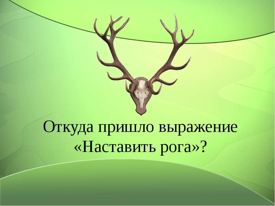 Откуда пришло выражение «Наставить рога»?