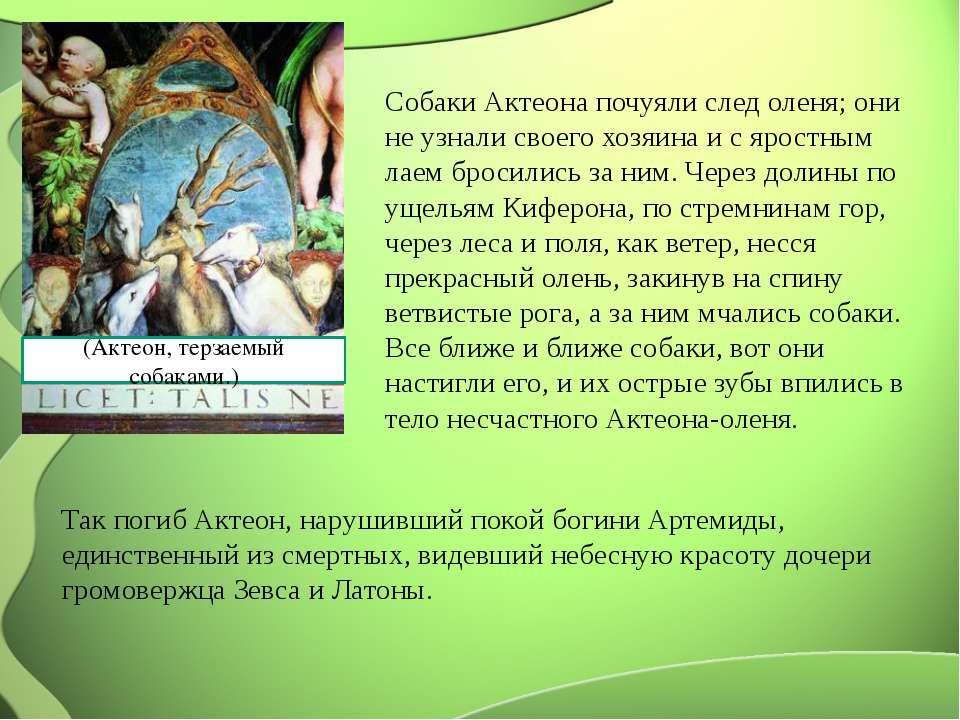 (Актеон, терзаемый собаками.) Собаки Актеона почуяли след оленя; они не узнал...