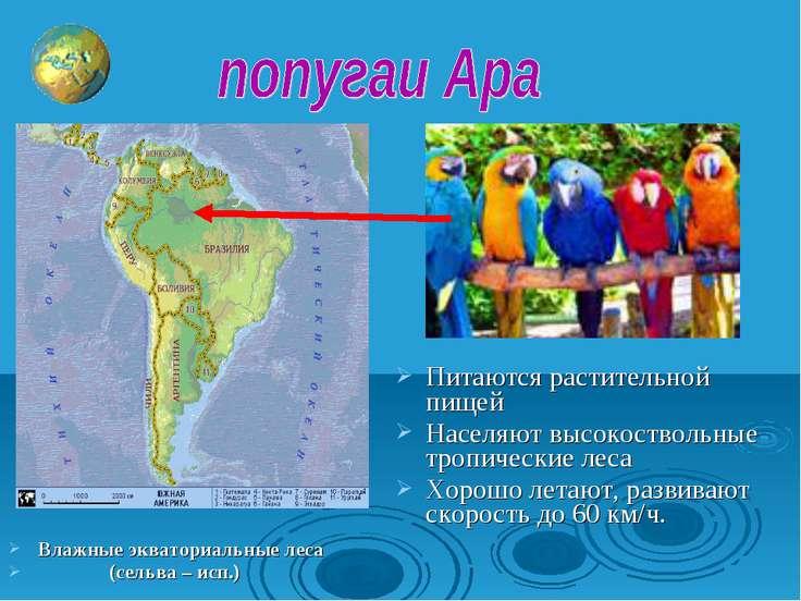 Влажные экваториальные леса (сельва – исп.) Питаются растительной пищей Насел...