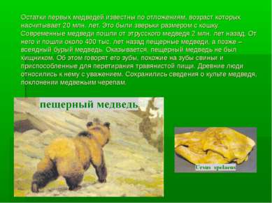 Остатки первых медведей известны по отложениям, возраст которых насчитывает 2...