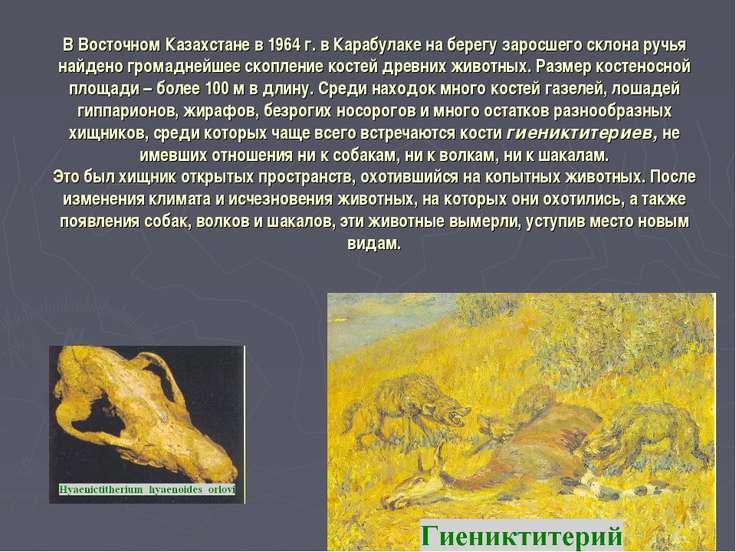 В Восточном Казахстане в 1964 г. в Карабулаке на берегу заросшего склона ручь...