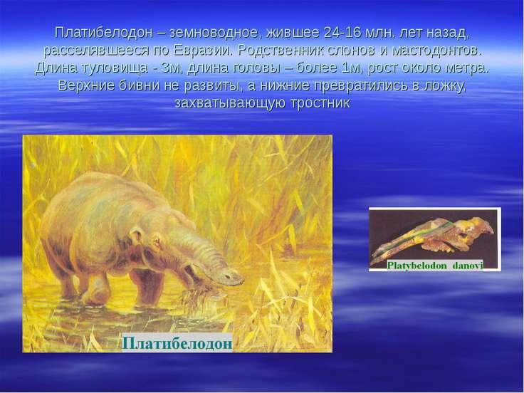 Платибелодон – земноводное, жившее 24-16 млн. лет назад, расселявшееся по Евр...