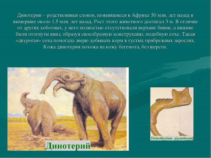 Динотерии – родственники слонов, появившиеся в Африке 50 млн. лет назад и вым...