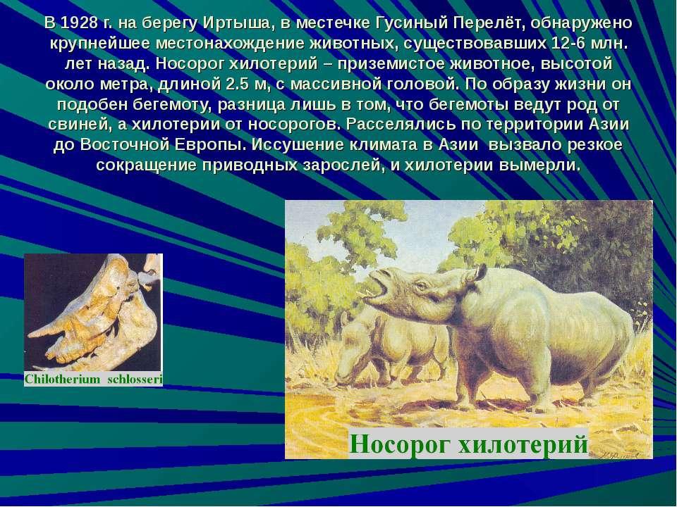 В 1928 г. на берегу Иртыша, в местечке Гусиный Перелёт, обнаружено крупнейшее...